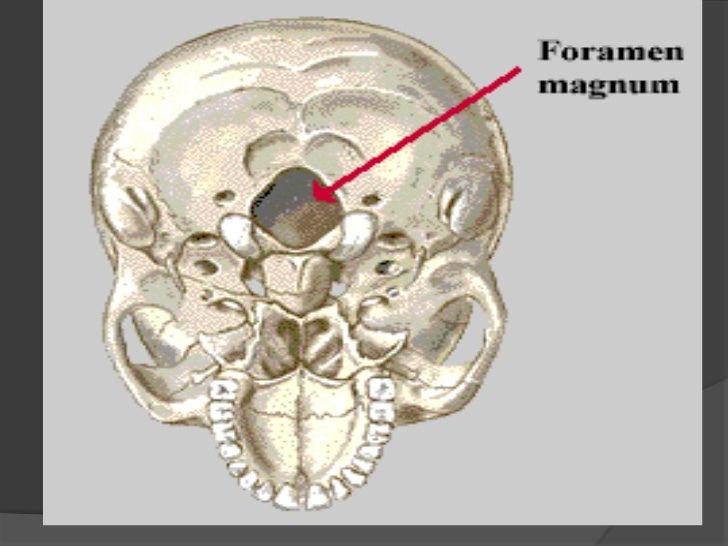 anteposicion cabeza y cuello pdf
