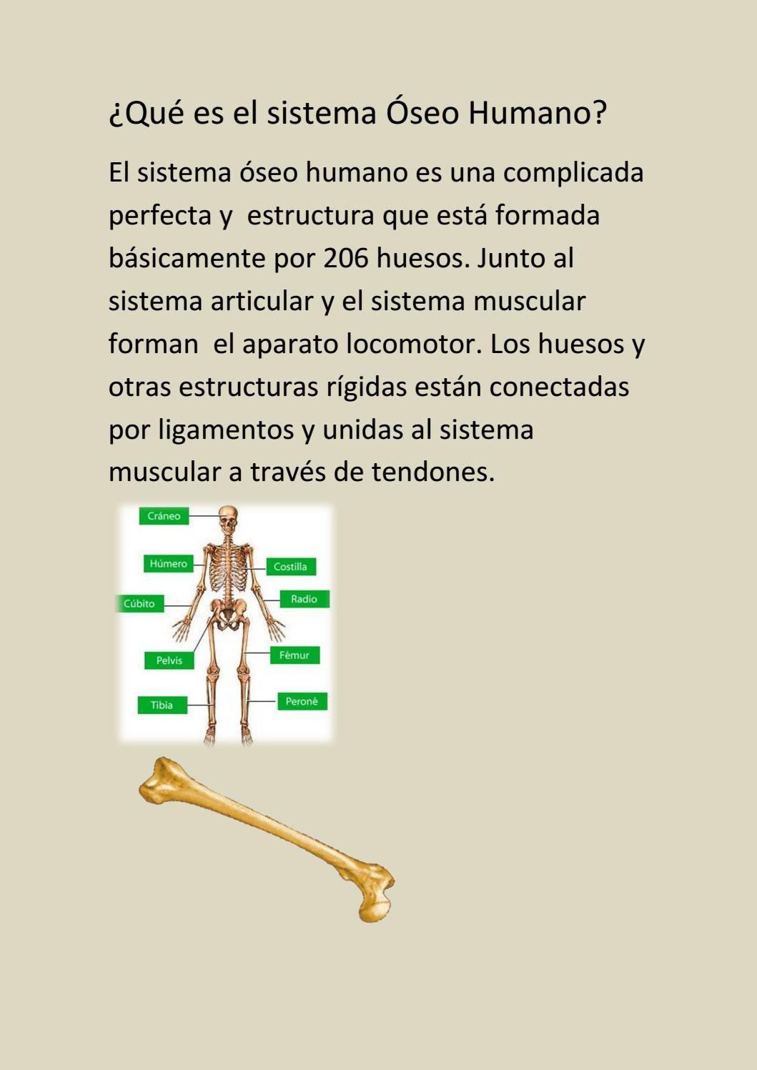 206 huesos del cuerpo humano pdf