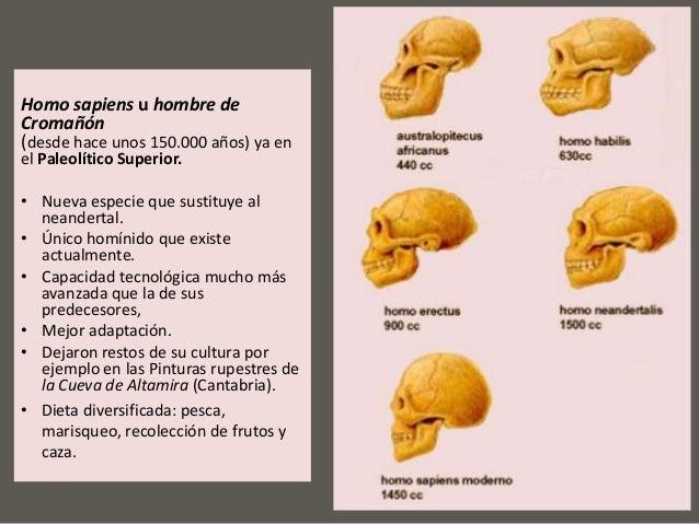 adaptacion dieta de los hominidos pdf