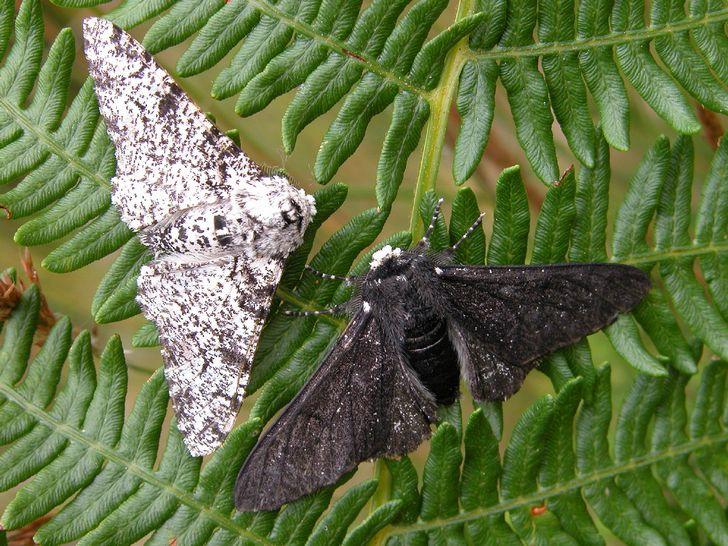 condiciones para criar y tener mariposas