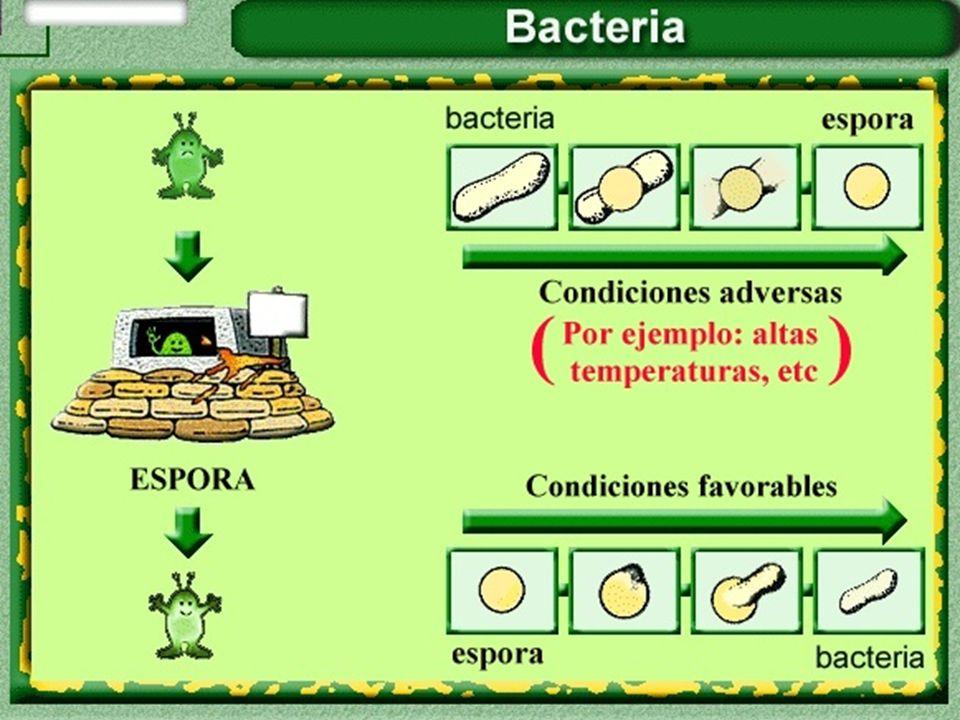 condiciones desfavorables para la listeria