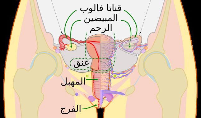 anatomía y movimiento humano estructura y funcionamiento pdf