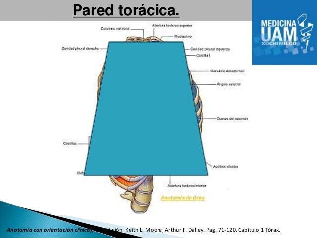 anatomia con orientacion clinica moore pdf 6 edicion