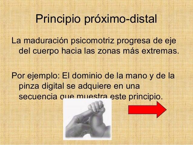 desarrollo de la prension pdf