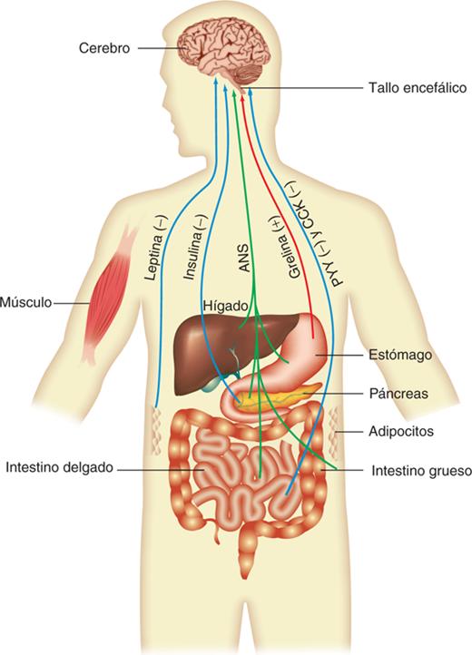 bioquimica las bases moleculares de la vida mckee pdf descargar