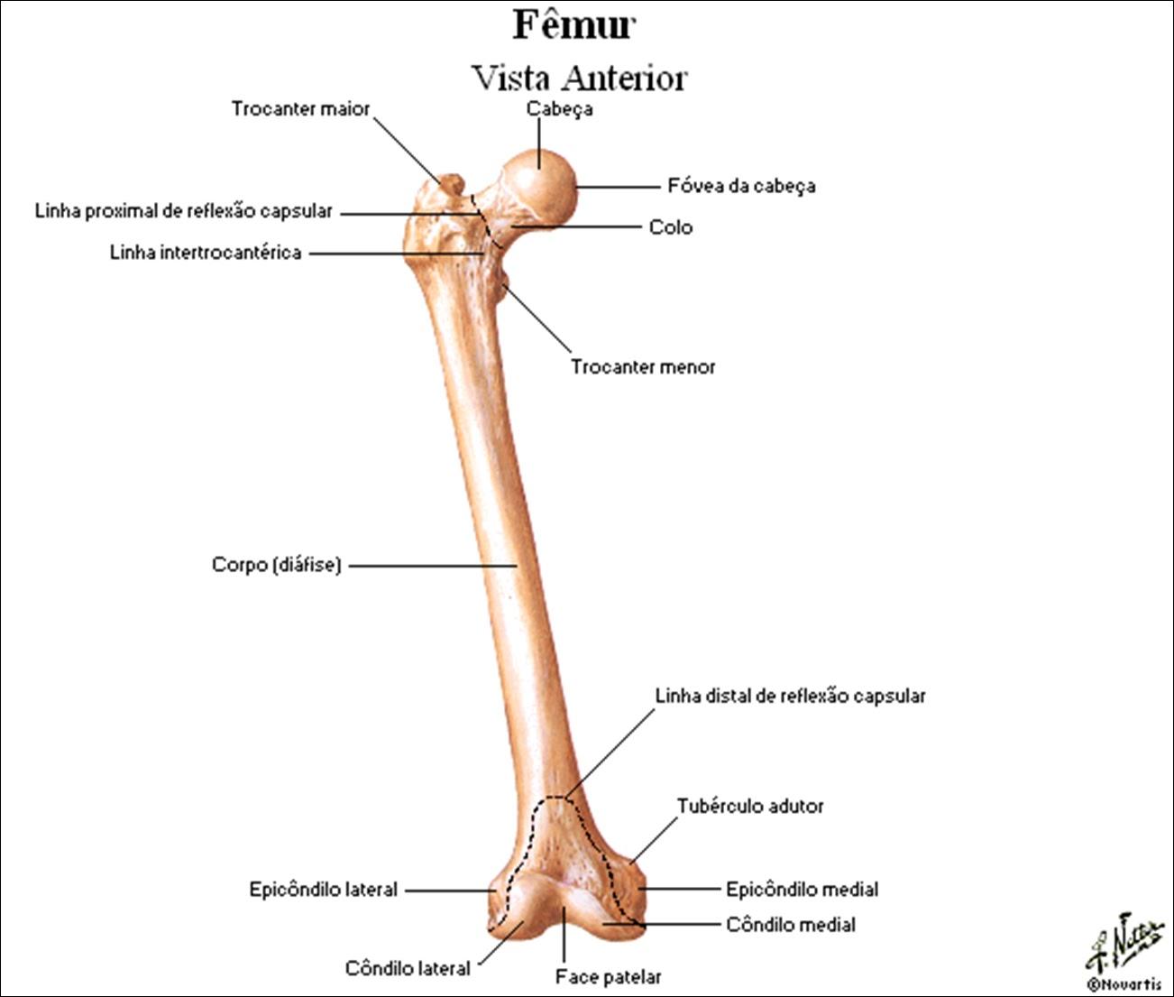 bontrager anatomia radiologica online pdf