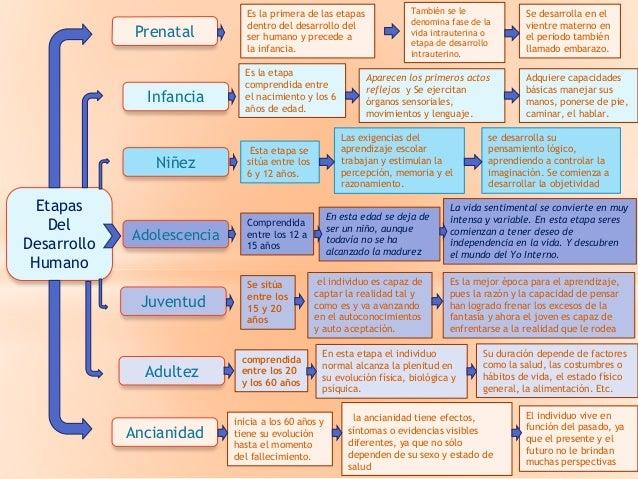 ciclo vital del ser humano con edades pdf
