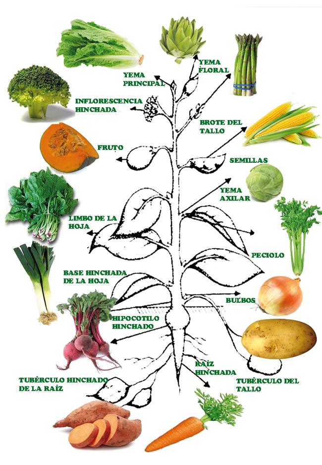 ciencia de la planta comestible pdf