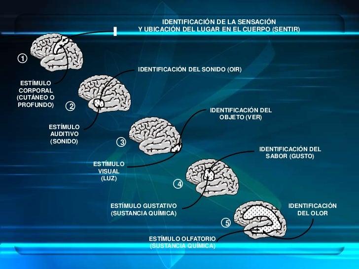como aprende el ser humano pdf
